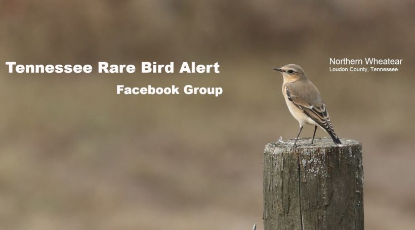 Tennessee Rare Bird Alert Facebook Group