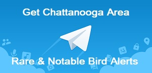 Greater Chattanooga Area Rare Bird Alert via the Telegram mobile app