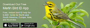 Need a bird guide? We recommend the free Merlin Bird ID App from Cornell University