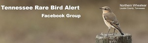 Tennessee Rare Bird Alerts via Facebook