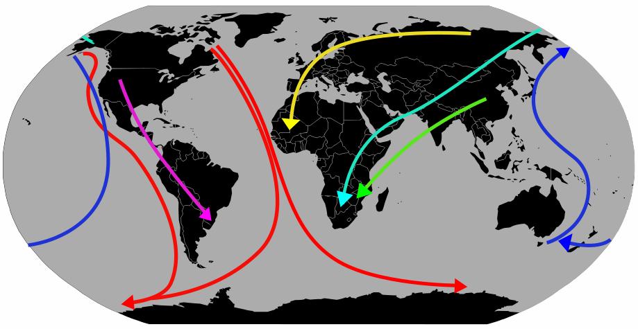 Bird Migration Routes